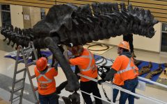 Dinosaur skeleton model coming to Science Center