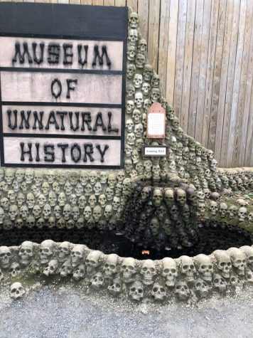 A small museum to walk through with many unknown and creepy magical creatures. (Photo: Aiesha Solomon)